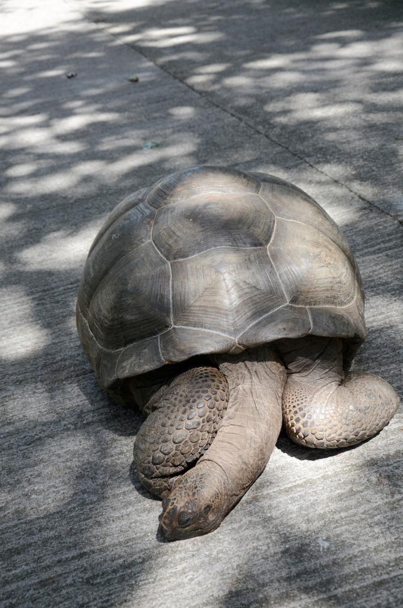 Seychellene - La Digue 119f